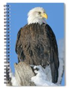Bald Eagle Haliaeetus Leucocephalus Spiral Notebook