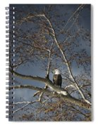 Bald Eagle In A Tree Spiral Notebook