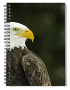 Bald Eagle In Ecomuseum Zoo Spiral Notebook