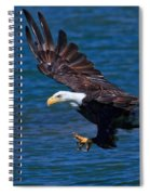 Bald Eagle On The Hunt Spiral Notebook