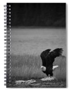 Bald Eagle Take Off Series 3 Of 8 Spiral Notebook
