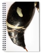 Bald-faced Hornet Stinger Spiral Notebook