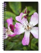 Ballerina Shrub Rose 3303 Spiral Notebook