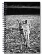 Bambi In Black And White Spiral Notebook
