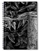 Bamboo Border Spiral Notebook