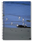 Band Of Seagulls Spiral Notebook