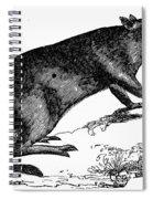 Bandicoot Spiral Notebook