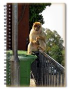Barbary Ape Spiral Notebook