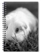Barbie Guinea Pig Spiral Notebook