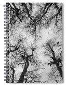 Bare Cypress Spiral Notebook