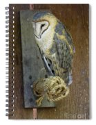 Barn Owl At Roost Spiral Notebook