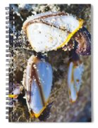Barnacles Spiral Notebook