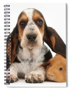 Basset Hound And Guinea Pig Spiral Notebook