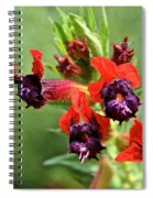 Bat Face Cuphea Spiral Notebook