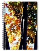 Bathed In Sunlight Spiral Notebook