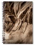 Baydie Spiral Notebook