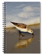 Beach Bird Spiral Notebook