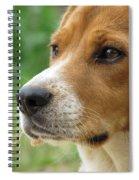 Beagle Gaze Spiral Notebook