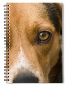 Beagle Hound Dog Eyes Of Love Spiral Notebook