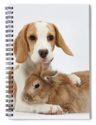 Beagle Pup And Rabbit Spiral Notebook