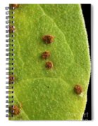 Bean Leaf With Rust Pustules Spiral Notebook