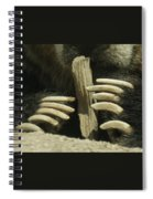 Bear Claws Spiral Notebook