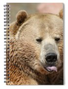 Bear Rasberry Spiral Notebook