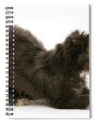 Bearded Collie Pup Spiral Notebook