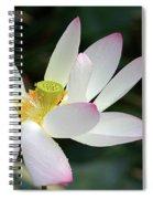 Beatutiful Wet Lotus Spiral Notebook