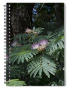 Beautiful Alabama Mimosa Silk Tree Spiral Notebook