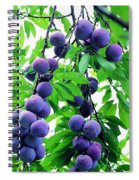 Beautiful Blue Plums On The Tree Spiral Notebook