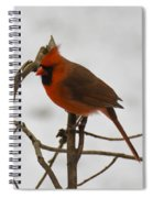 Beautiful Cardinal Spiral Notebook