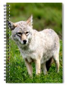 Beautiful Coyote In Alaska Spiral Notebook