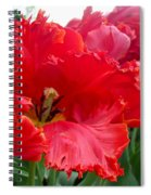 Beautiful From Inside And Out - Parrot Tulips In Philadelphia Spiral Notebook