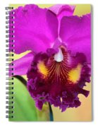 Beautiful Hot Pink Orchid Spiral Notebook