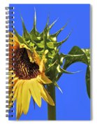 Beautiful Moves In Curves Spiral Notebook