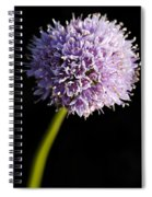 Beautiful Purple Flower With Black Background Spiral Notebook