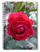 Beautiful Red Rose In A Small Garden Spiral Notebook