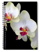 Beautiful White Orchids Spiral Notebook