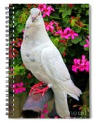 Beautiful White Pigeon Spiral Notebook