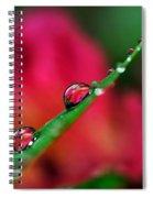 Beauty After The Rain Spiral Notebook
