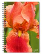 Beauty In The Rain Spiral Notebook