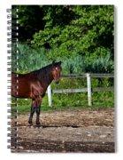 Beauty Of A Horse Spiral Notebook