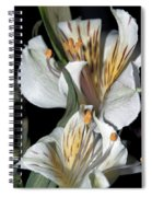 Beauty Untold Spiral Notebook