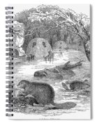 Beavers Spiral Notebook