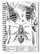 Bee Anatomy Historical Illustration Spiral Notebook