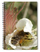 Bee Break Spiral Notebook