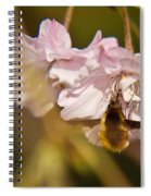 Bee Fly Feeding 1 Spiral Notebook