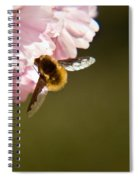 Bee Fly Feeding 4 Spiral Notebook