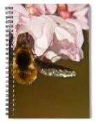 Bee Fly Feeding 5 Spiral Notebook